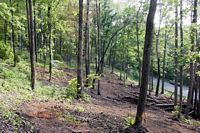 1-1/2 acre lots near Kingston, TN